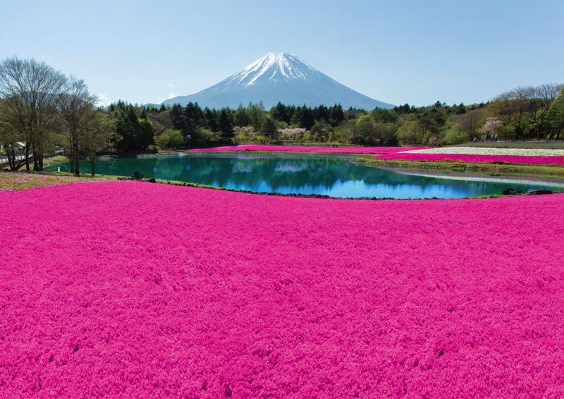 富士芝桜まつり/イメージ